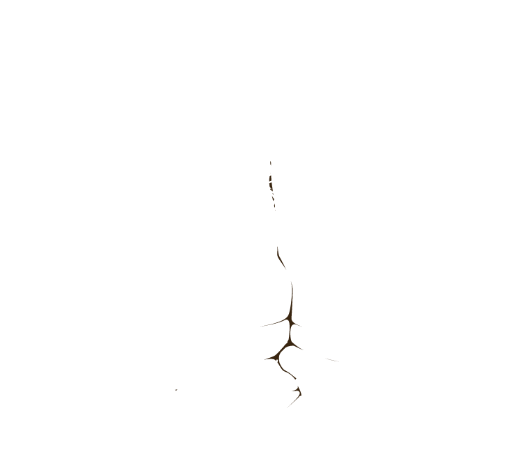 Worcester County Conservation District